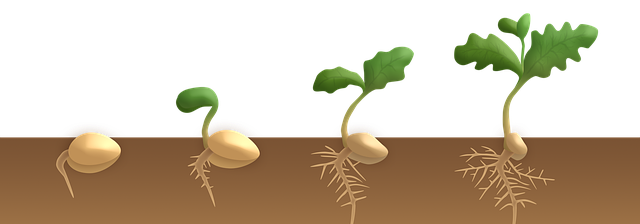 germination-3989959_640.png