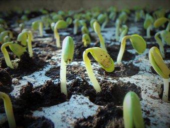 Image de La germination au cycle 2