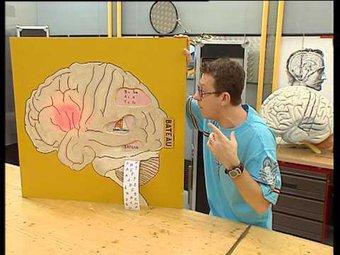 Image de C'est pas sorcier -cerveau 2 : j'ai la memoire qui flanche