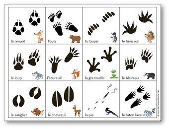 Image de Jeu de mémory des empreintes des animaux de la forêt