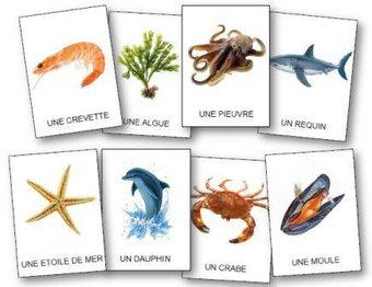 Image de L'imagier de la mer et sa faune