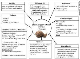 Image de Carte mentale : le développement des animaux- l'escargot