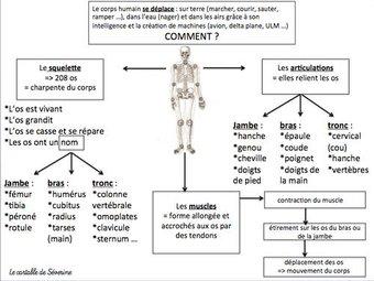 Image de Le corps humain (carte mentale)