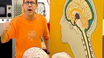 Image de Anatomie du cerveau