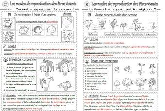 Image de Les modes de reproduction des êtres vivants : traces écrites