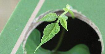 Image de Le labyrinthe des plantes