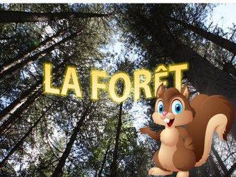 Image de La foret : activités cp/ce1/ce2