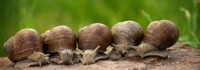 snail-2983235_640.jpg